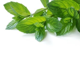 1/2 oz (15ml) or 1 oz ( 30 ml) PEPPERMINT ESSENTIAL OIL 100% Essential Oil - Aromatherapy - Sauna & Steam Rooms  - Laundry Cleaning Additive