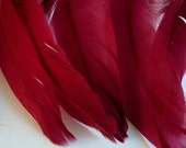 Feathers Goose Shoulders Claret