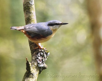 The Nuthatch Fine Art Photography Download