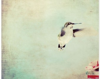 Animal photography, hummingbird, nature photography, fine art print, nursery decor