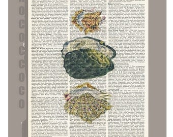 Vintage book print - Beautiful oyster shells2  -ARTWORK  printed on Repurposed Vintage Dictionary page 8x11 -Upcycled Book Print
