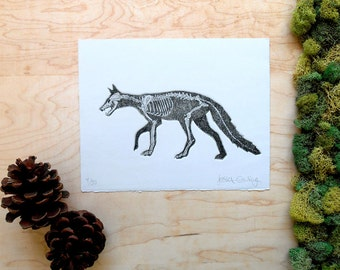 Red Fox Skeleton Etching - ARTIST PROOF - Fox Print - Fox Bones Anatomy - Animal Skeleton Etching Skull Bones - Intaglio Etching Hand-Pulled