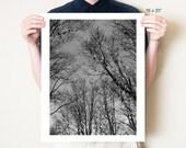 Black and white trees photography, monochromatic gothic decor. Eerie dark woodland fairy tale art. Photo print in 5x7, 8x10, 11x14 - 30x40