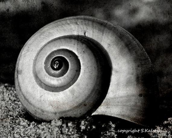 Black and white seashell