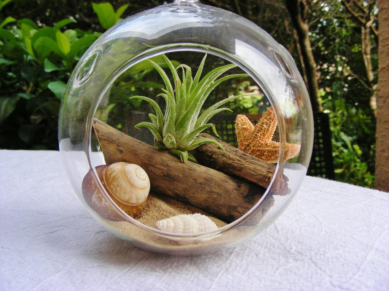 Air plant and driftwood in glass globe hanging terrarium kit - Kit terrarium plante ...