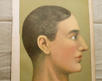 4 part overlay 1900s color lithograph Medical MANIKIN from antique 1905 medical book - head, brain, skull, litho