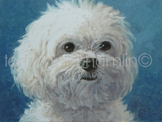 maltese painting maltese dog print maltese dog portrait maltese dog by 1830