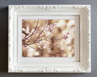 spring blossoms photo pink blossoms cherry blossoms golden light bokeh fine art wall