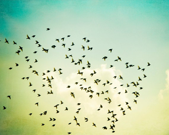 """Flying Bird Photography, birds fly sky nursery flock mint turquoise yellow teal green print, 20x30, 16x24 Photograph, """"The Great Escape"""""""