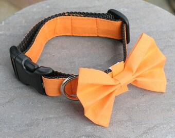 "Ready To Ship 1"" Dog Collar 2 sizes available - Fall Pumpkin Orange"