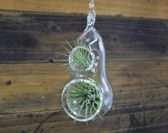 Two Holed Hand Blown Glass Terrarium // Hanging Air Plant Terrarium