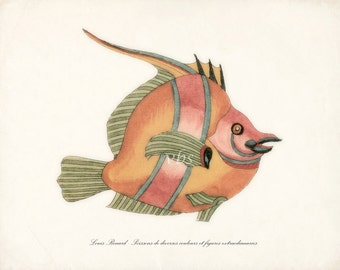 Fish of the Coral Reefs Illustration No. 3 - Natural History Coastal Decor Print 10 x 8 Coral