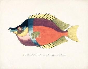 Fish of the Coral Reefs Illustration No. 11 - Natural History Coastal Decor Giclee Print 10 x 8 Multi