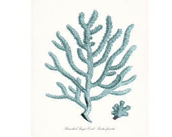 Coastal Decor Sea Coral Branched Finger Coral Natural History Giclee Art Print 8x10 tide pool