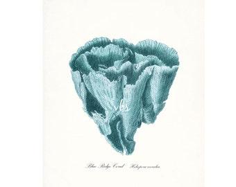 Coastal Decor Blue Ridge Sea Coral Natural History Wall Decor Art Print 8x10 tide pool