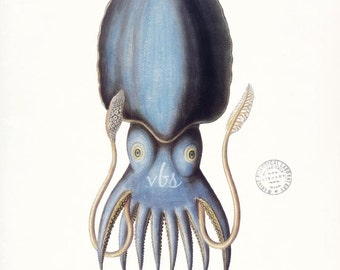 Vintage Cuttlefish Natural History Nautical Giclee Art Print 8x10 - 3 color choices