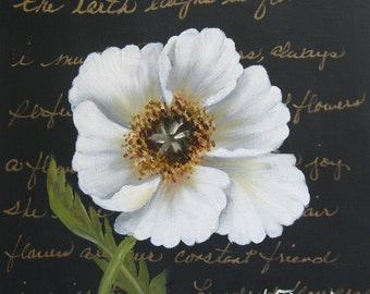White Poppy on Black, an Original Oil Painting by Jo Edwards