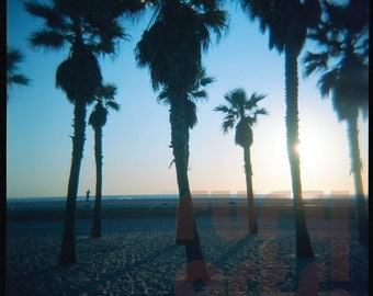 Palm Trees, Late Afternoon - Giclée Print from Holga Photograph, Color Film