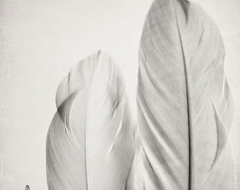 Feather Photography- Feather Wall Art, Nature Photo, Black and White Feather Photograph, Soft Grey Home Decor, Two Feathers Print,