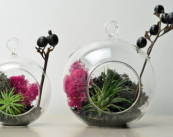 Modern Terrarium - Air Plant - Hanging Glass Orb - Green Gift - Home Decoration