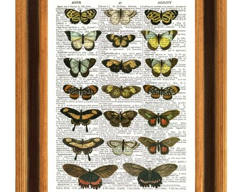Print dictionary Selection of Butterflies, vintage 1800 illustration. Wall decor shabby chic natural history dictionary book art page Print