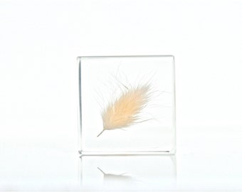 BIG SALE! One of a Kind! Mini Living Memories - White Bunny Tail Grass Resin Cube, Natural White Hare's Tail Grass Resin, Bunny Tail Resin