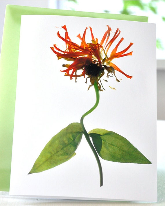 Note Card Floral Flowers Party Invitation Zinnia Explosion