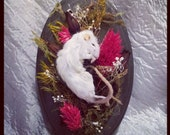 Mummified Mouse on Wall Hanging Plaque