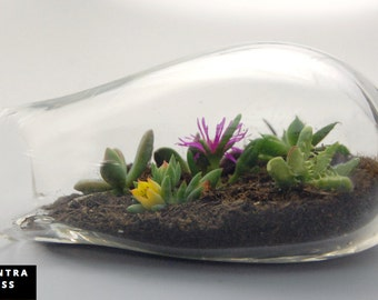 Glass Terrarium SALE, Terrarium, Blown Glass Terrarium, Terrarium Kit, Succulents, Glass Terrarium, Glass, Garden