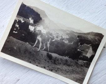 Original Vintage Photograph Beautiful Dog Overlooks Village 1916