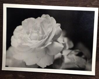 Large Original Vintage Antique Photograph Gorgeous Flower Close Up Photography