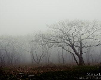 Mystical Tree Photography, Craggy Gardens Mist, Asheville, NC Blue Ridge Parkway Photo PRINT, Tree Wall Art, Mountain Photography, Misty Fog