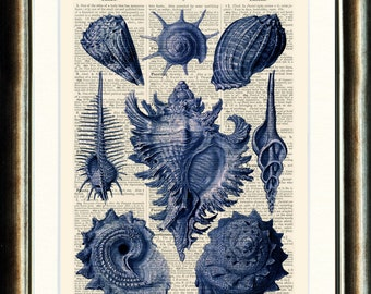 Blue Sea Shells - Upcycled vintage image printed on a late 1800s Dictionary page Buy 3 get 1 FREE