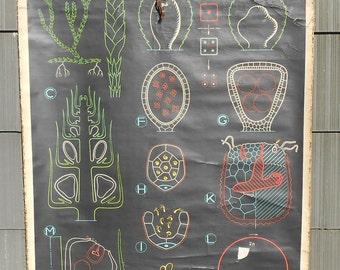 Vintage Belgian School Chart (Fern)