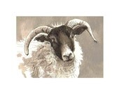 Maise, Black Face sheep, Greetings Card -  blank, notecard