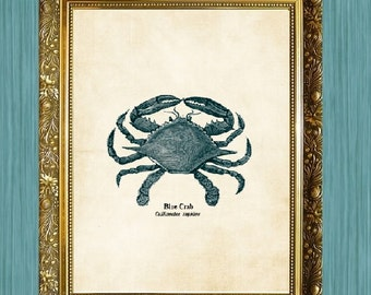 Buy 3 Get 1 FREE Blue Crab Art Print Crab Art 8 x 10 Sea Life Art Print Seaside Art Print Sealife Art Print Natural History Print