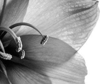 Flower Photography, Botanical Photography, 8x10 print, Black and White, Chic, Dramatic, Elegant, Fine Art Photography, Nature, Macro