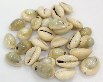 Cowrie Shells, Top Drilled Cowries, Seashells , 25 Pcs - COWSH1