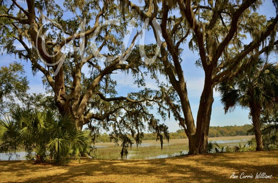 Brookland Pointe Lawn, Edisto Island, South Carolina (16 x 20 inches)