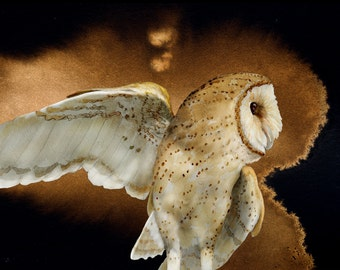 Barn Owl 1 signed fine art print 8x10, Owls, Barn owls, Bird lover gift, Bird prints