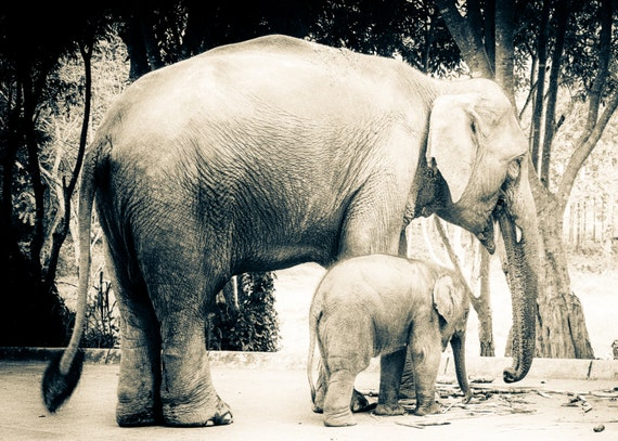 Sepia Photo Print of Baby Elephant with Mother. Wall Art Home Decor. Thailand. Southeast Asia Travel Photography.