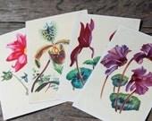 Set of 4 Vintage Botanical Postcards - Flower Postcards, Plant  Illustrations, Botanical Prints