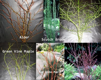 Branch Assortment! Fresh Cut Branches 120 stems  OUT OF SEASON