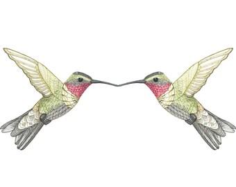 Hummingbird Art Print -Watercolour Print - Bird Art - Bird Print - Hummingbirds - Bird Wall Art - Hand drawn Art