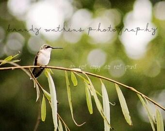 Hummingbird fine art nature wildlife bokeh 5x7 photography art print fine art