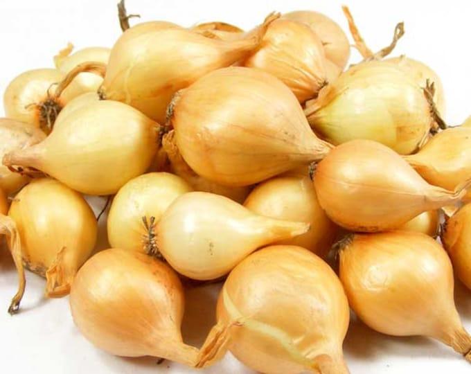 Yellow Onion Sets Organic   Stuttgarter Onion Bulbs Spring Shipping 50-60 Bulbs  8 oz. - Spring Shipping