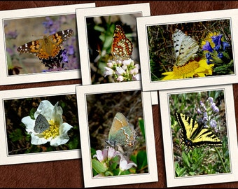 6 Butterfly Photo Greeting Card Set - 5x7 Butterfly Note Card Set - Butterfly Greeting Cards With Envelopes - Photo Note Cards (GP59)