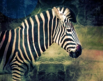 Zebra print study overlaid with sketch book designs, green gold stripe, Africa wall art, fine art photography