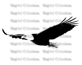 Bald Eagle Engraving. Eagle PNG. Animal PNG. Eagle Prints. Eagle Images. Eagle Pictures. Eagle Clipart. Eagle Drawings. Eagle Art. No. 0061.