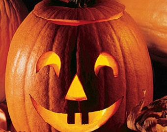 Organic Jack O'Lantern Pumpkin Seeds ~Mycorrhizae Inoculated/Bulk Available~